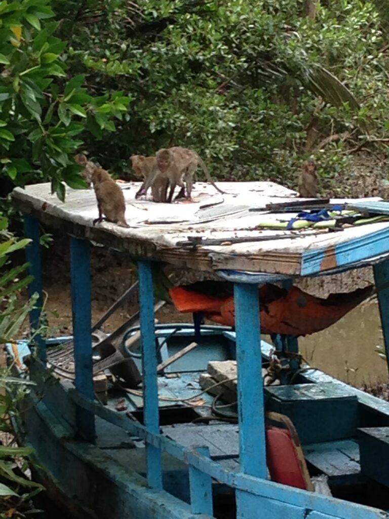 バスから船の上に猿のアップ