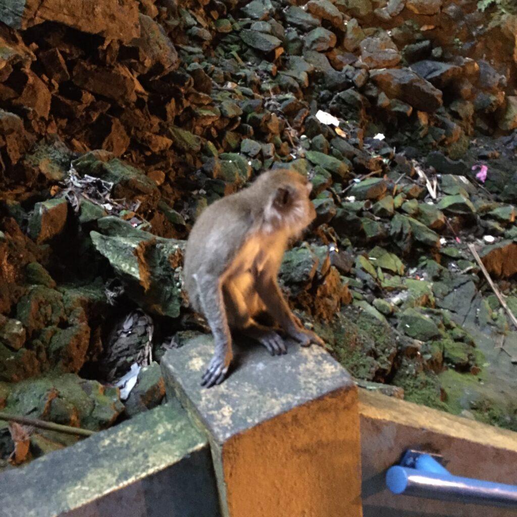 バトゥ洞窟内の野生の猿
