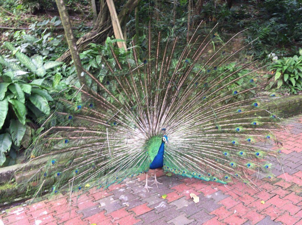 鳥が羽を広げる